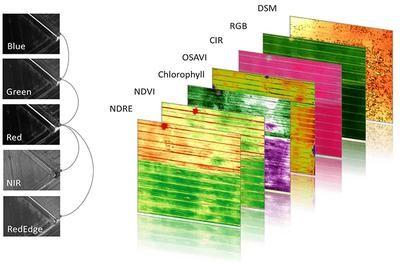 Analise NDVI - agricultura de precisão