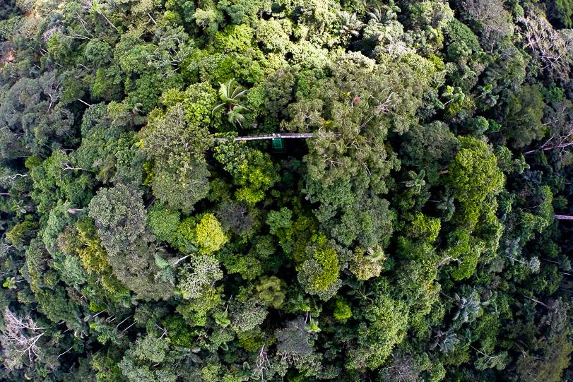 monitoramento florestal com drones
